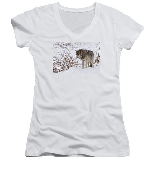 Women's V-Neck T-Shirt (Junior Cut) featuring the photograph Timber Wolf In Winter by Michael Cummings