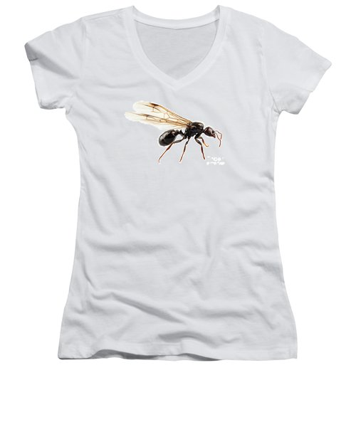 Black Winged Garden Ant Species Niger Lasius Women's V-Neck (Athletic Fit)