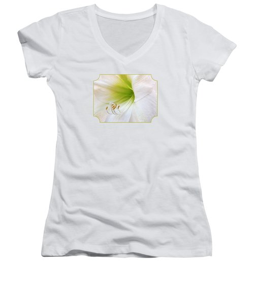 Alluring Amaryllis Women's V-Neck T-Shirt (Junior Cut) by Gill Billington