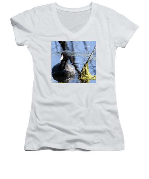 American Coot Women's V-Neck T-Shirt