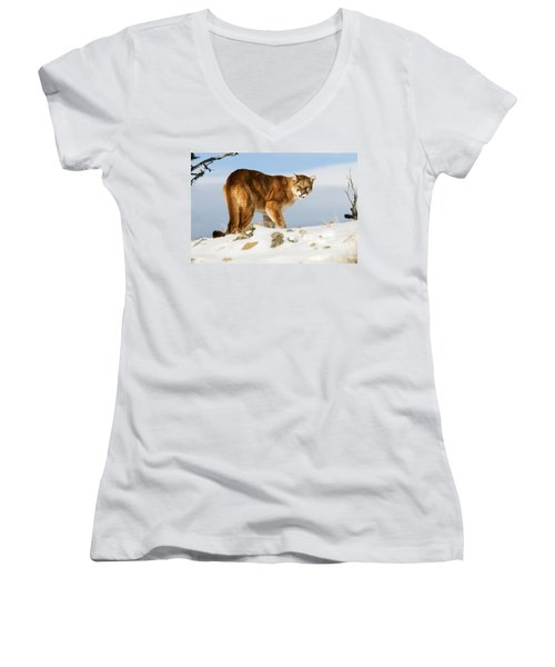 Women's V-Neck featuring the photograph Angry Mountain Lion by Scott Read