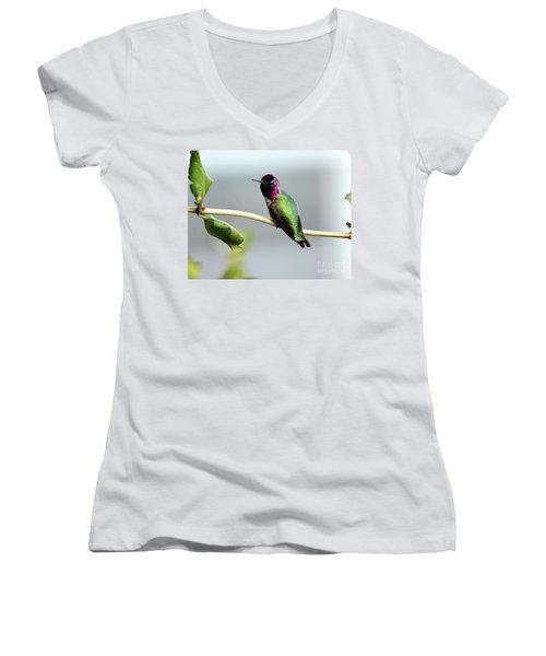 Anna's Hummingbird Women's V-Neck T-Shirt