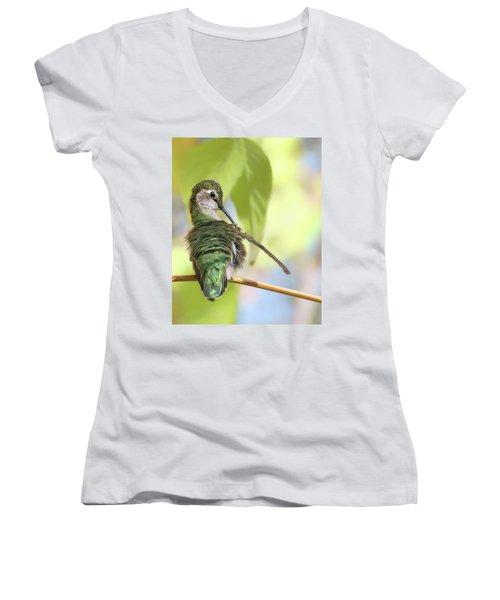 Anna's Hummingbird - Preening Women's V-Neck T-Shirt