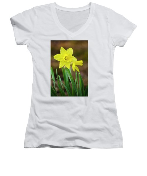 Beautiful Daffodil Flower Women's V-Neck T-Shirt