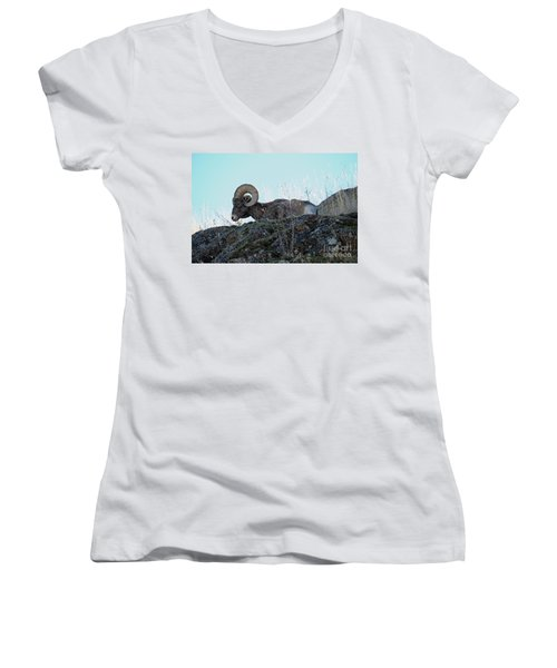 Bighorn Sheep Women's V-Neck T-Shirt (Junior Cut) by Cindy Murphy - NightVisions