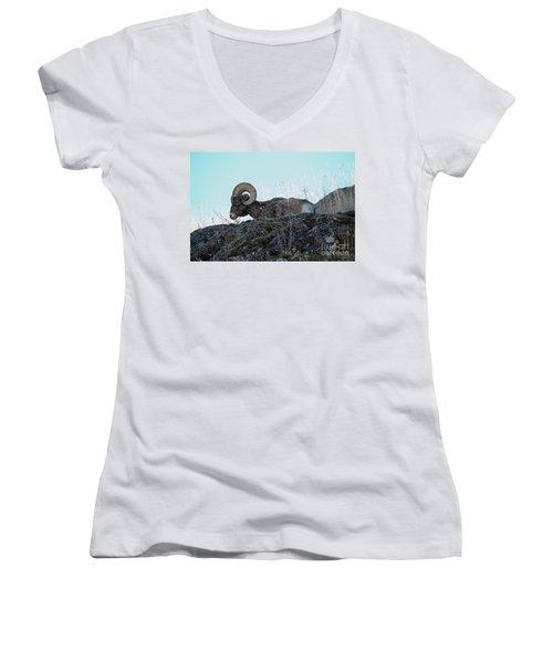 Bighorn Sheep Women's V-Neck T-Shirt