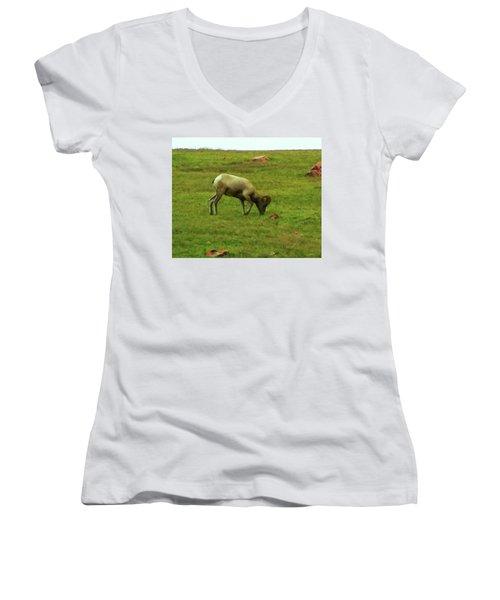 Women's V-Neck T-Shirt (Junior Cut) featuring the digital art Bighorn Sheep Grazing by Chris Flees