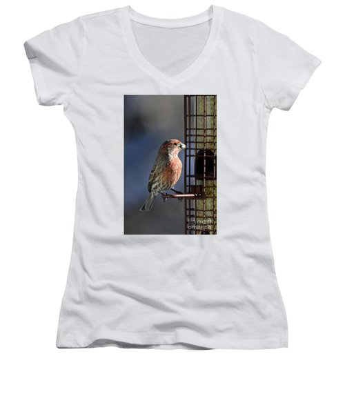 Bird Feeding In The Afternoon Sun Women's V-Neck