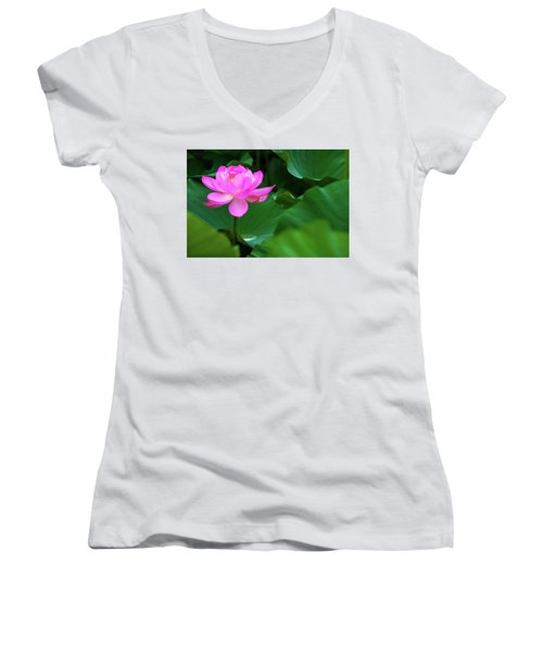 Blooming Pink Lotus Lily Women's V-Neck