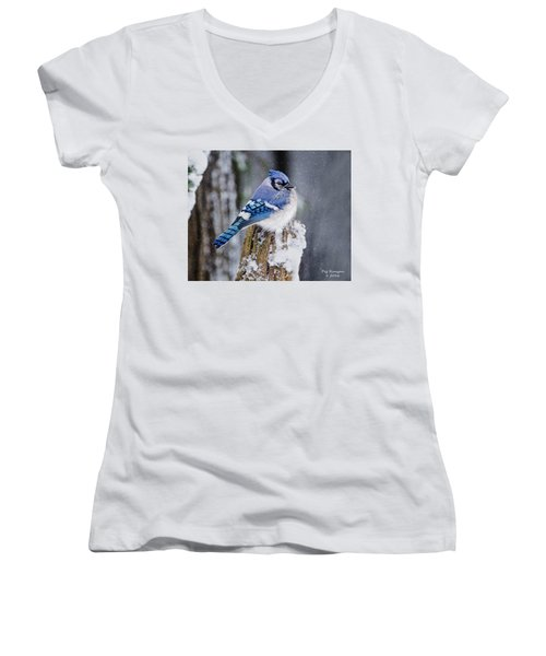Blue Jay On Snowy Post Women's V-Neck (Athletic Fit)