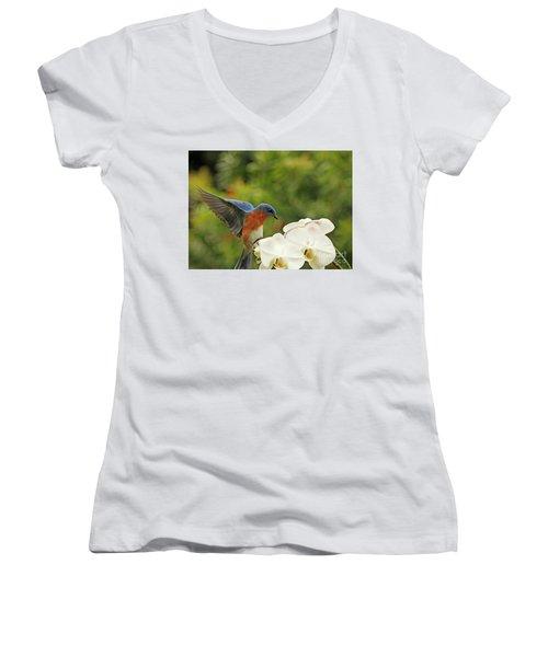 Bluebird Landing On Orchid Women's V-Neck T-Shirt (Junior Cut) by Luana K Perez