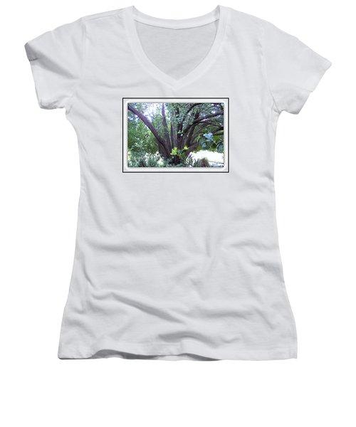 Bradford Women's V-Neck T-Shirt