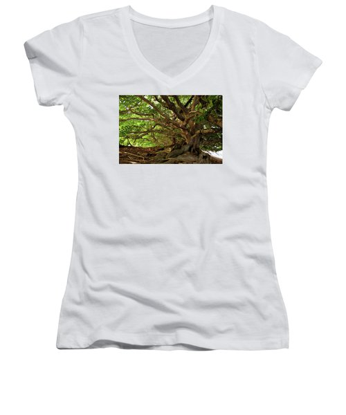 Branches And Roots Women's V-Neck (Athletic Fit)