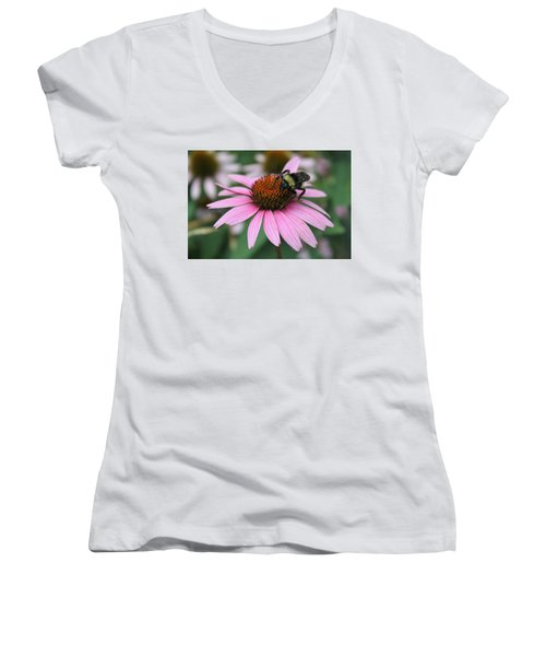 Bumble Bee On Pink Cone Flower Women's V-Neck T-Shirt (Junior Cut) by Sheila Brown