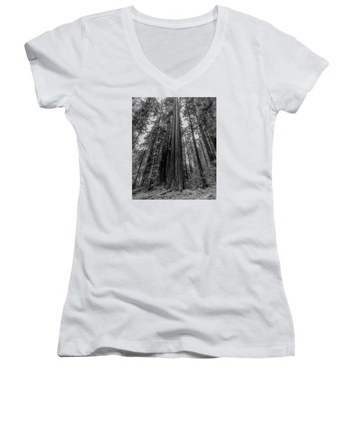 California Forest Women's V-Neck (Athletic Fit)