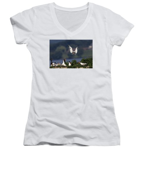 Caspian Tern Colony Women's V-Neck T-Shirt (Junior Cut) by Gary Hall