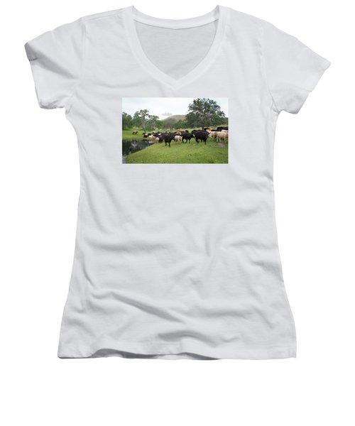 Cattle Women's V-Neck T-Shirt (Junior Cut) by Diane Bohna