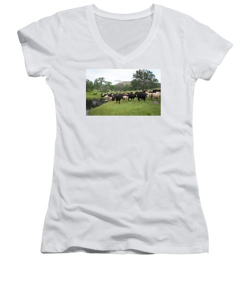 Cattle Women's V-Neck T-Shirt