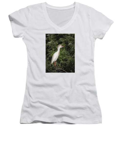 Women's V-Neck T-Shirt (Junior Cut) featuring the photograph Cattle Egret by Tyson and Kathy Smith