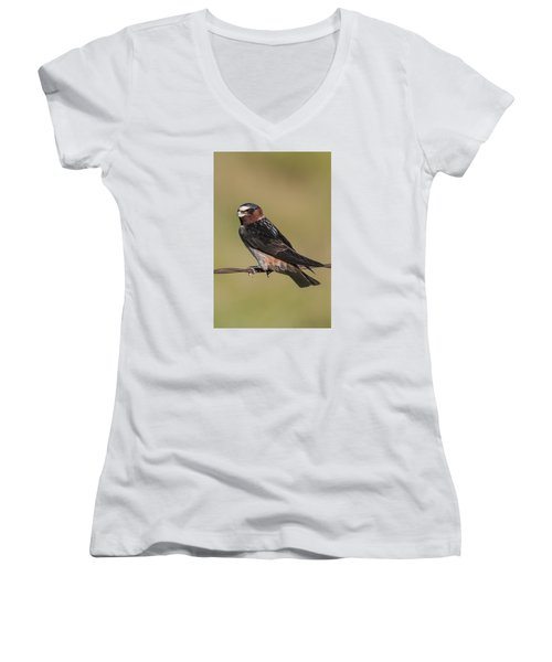 Women's V-Neck T-Shirt (Junior Cut) featuring the photograph Cliff Swallow by Gary Lengyel