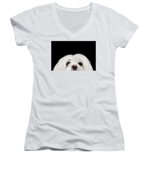 Closeup Nosey White Maltese Dog Looking In Camera Isolated On Black Background Women's V-Neck