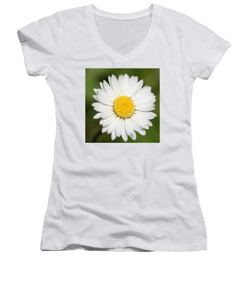 Closeup Of A Beautiful Yellow And White Daisy Flower Women's V-Neck T-Shirt (Junior Cut)