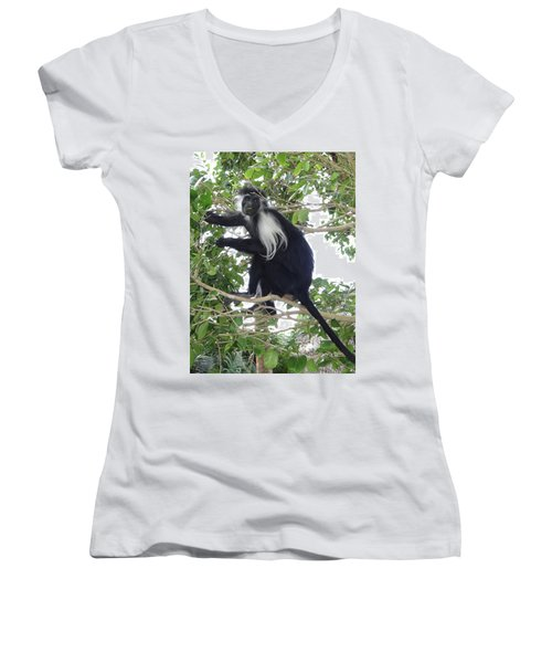 Colobus Monkey Eating Leaves In A Tree Women's V-Neck (Athletic Fit)