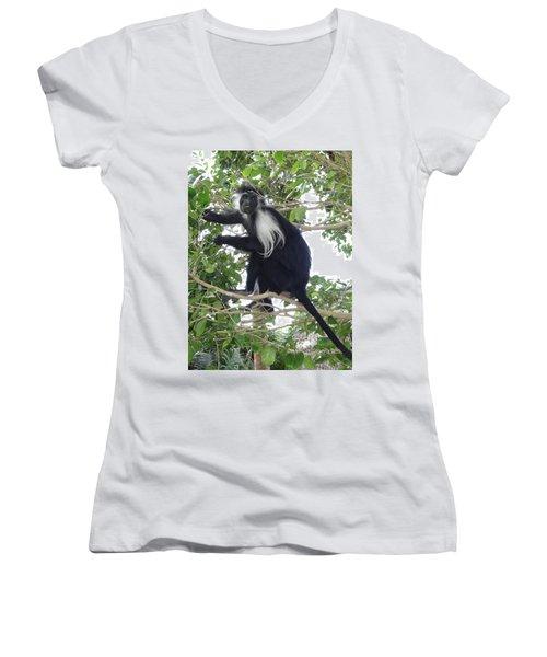 Colobus Monkey Eating Leaves In A Tree Women's V-Neck