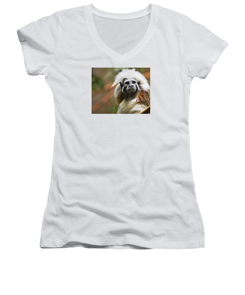 Cotton-top Tamarin _ 1a Women's V-Neck (Athletic Fit)