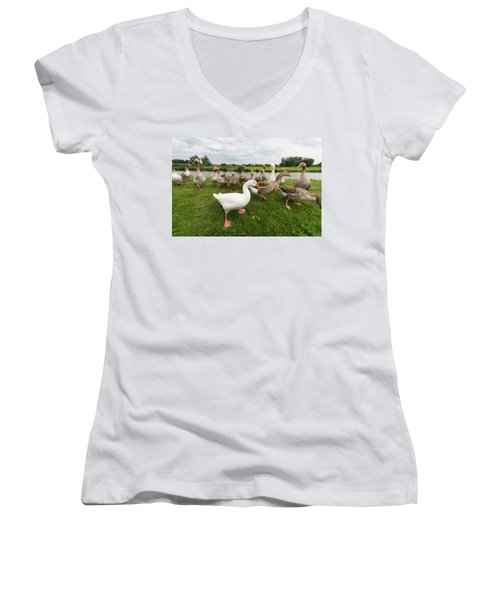 Curious Geese Women's V-Neck T-Shirt (Junior Cut) by Hans Engbers