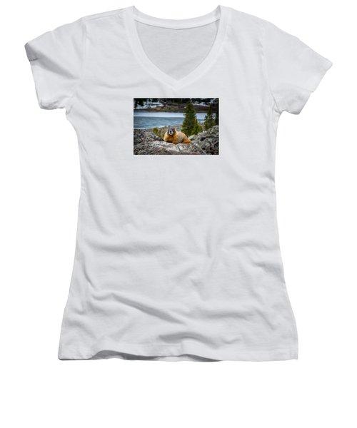 Curious Marmot Women's V-Neck T-Shirt (Junior Cut) by Michael J Bauer