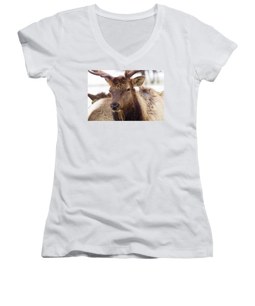 Women's V-Neck T-Shirt (Junior Cut) featuring the photograph Gaze From A Bull Elk by Jeff Swan