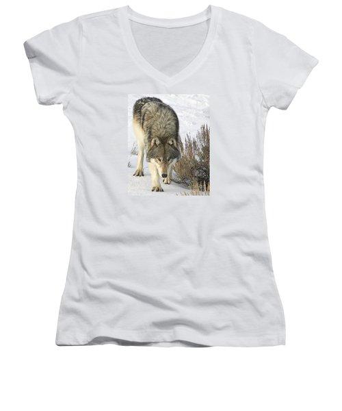 Gray Wolf Women's V-Neck T-Shirt