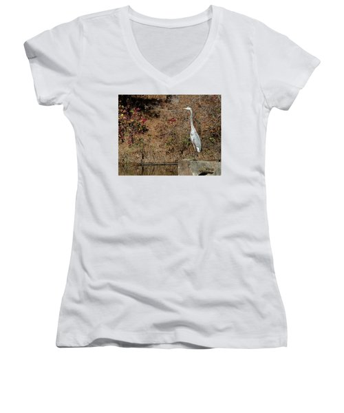 Great Blue Heron Standing Tall Women's V-Neck T-Shirt (Junior Cut) by George Randy Bass