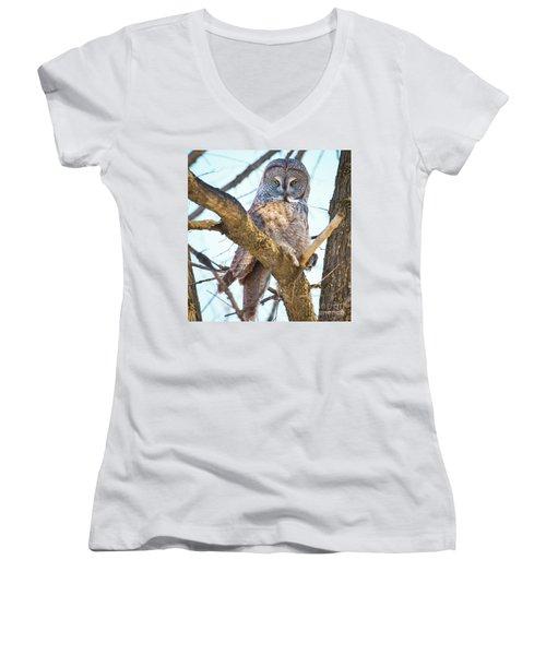 Great Gray Owl Women's V-Neck T-Shirt