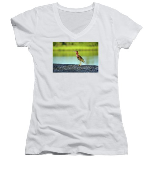 Green Heron Women's V-Neck T-Shirt (Junior Cut)