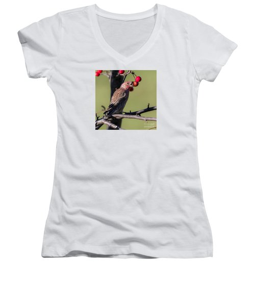 House Finch Vs Crabapple  Women's V-Neck