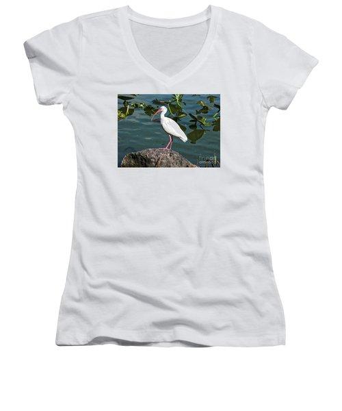 Ibis Rock Women's V-Neck T-Shirt (Junior Cut) by Carol Groenen
