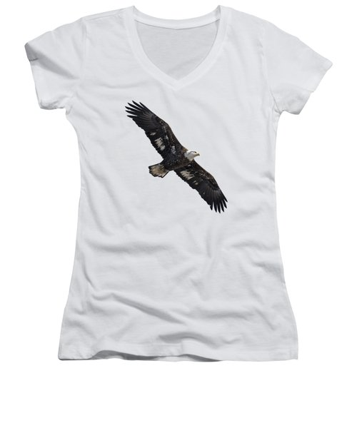 Isolated Juvenile American Bald Eagle 2016-1 Women's V-Neck T-Shirt (Junior Cut) by Thomas Young