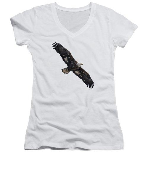 Isolated Juvenile American Bald Eagle 2016-1 Women's V-Neck
