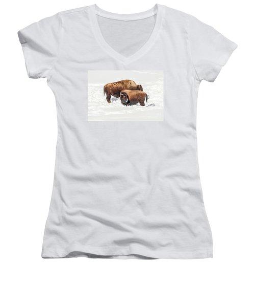 Juvenile Bison With Adult Bison Women's V-Neck T-Shirt