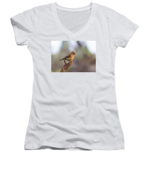 Juvenile Male Red Crossbill Women's V-Neck T-Shirt
