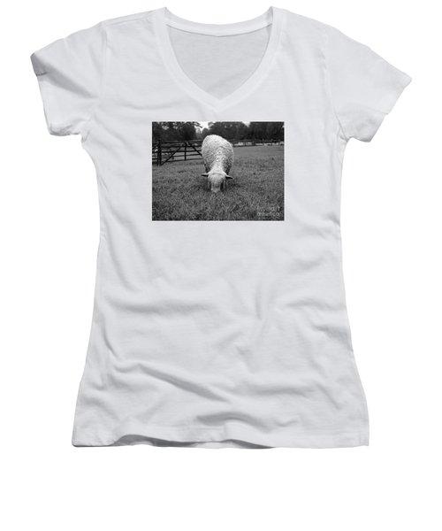 Longwool Sheep Grazing Women's V-Neck T-Shirt