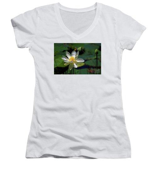 Lotus Blossom Women's V-Neck T-Shirt (Junior Cut) by Paul Mashburn