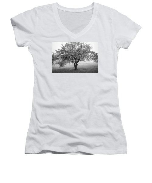 Women's V-Neck T-Shirt (Junior Cut) featuring the photograph Maine Apple Tree In Fog by Ranjay Mitra