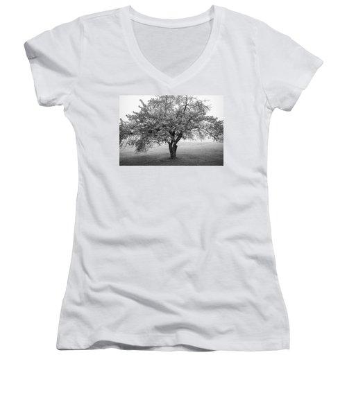 Maine Apple Tree In Fog Women's V-Neck