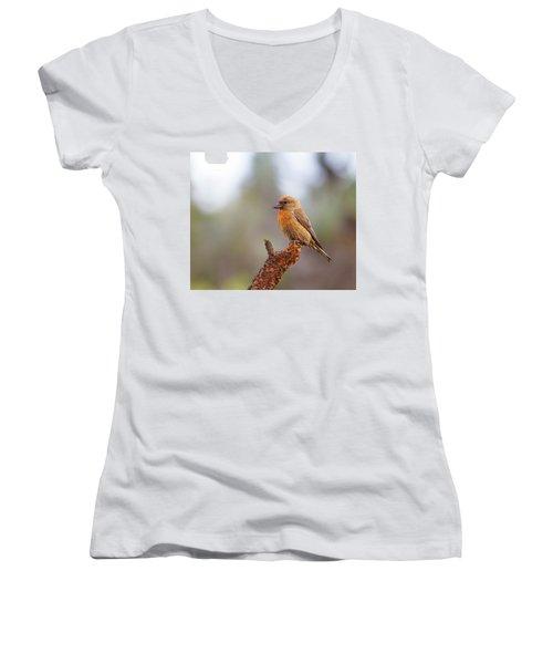 Male Red Crossbill Women's V-Neck T-Shirt (Junior Cut) by Doug Lloyd