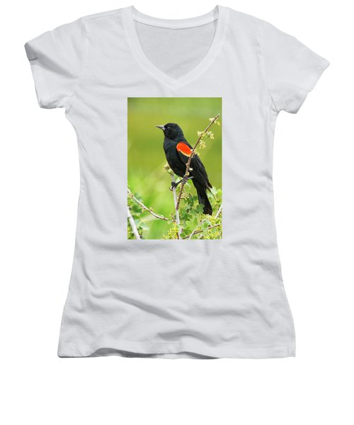Male Red-winged Blackbird Women's V-Neck (Athletic Fit)