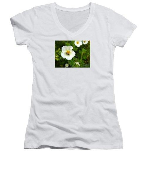 Massachusetts Carpenter Bee Women's V-Neck T-Shirt (Junior Cut) by KD Johnson