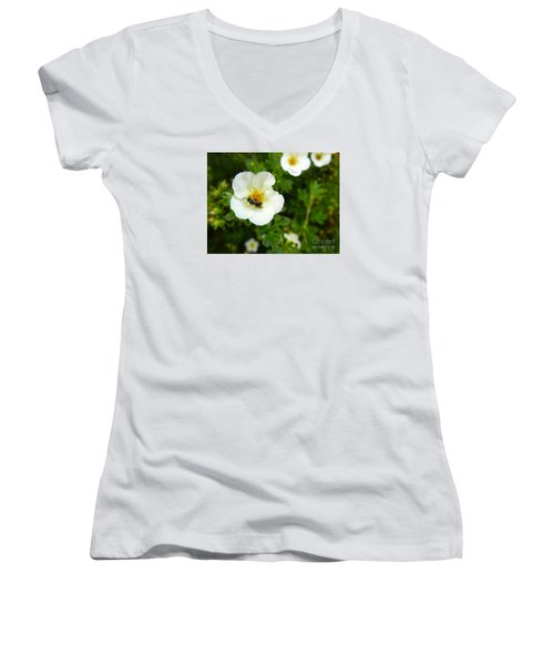 Massachusetts Carpenter Bee Women's V-Neck T-Shirt